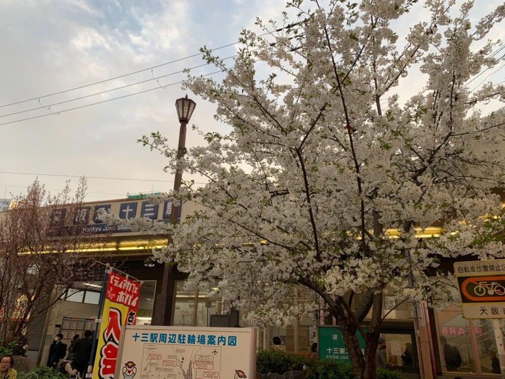 神津神社の自然