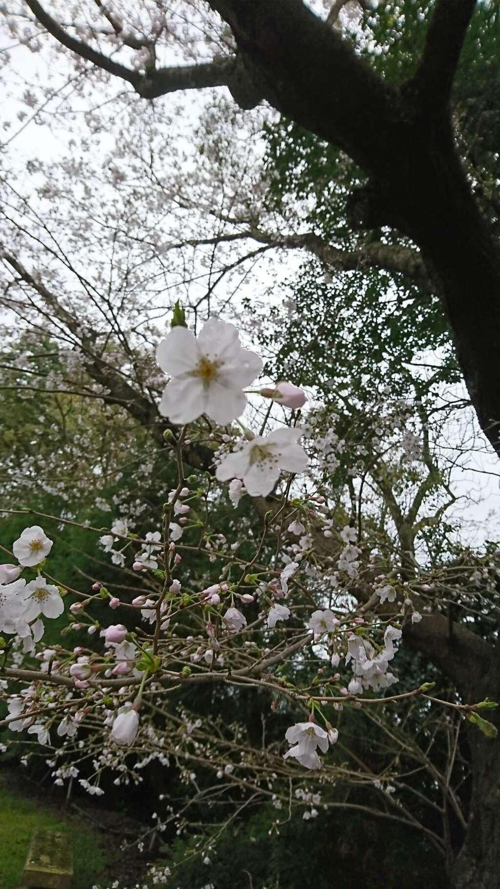 河内阿蘇神社の自然