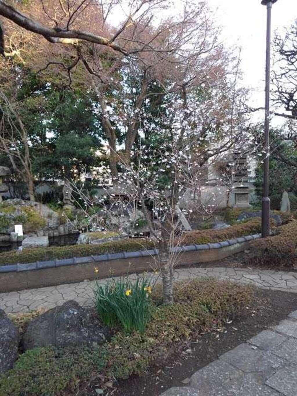 小川寺の庭園
