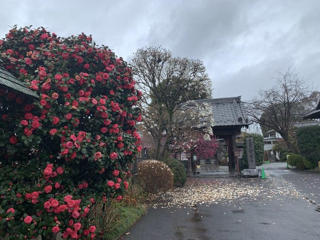 妙建寺の山門