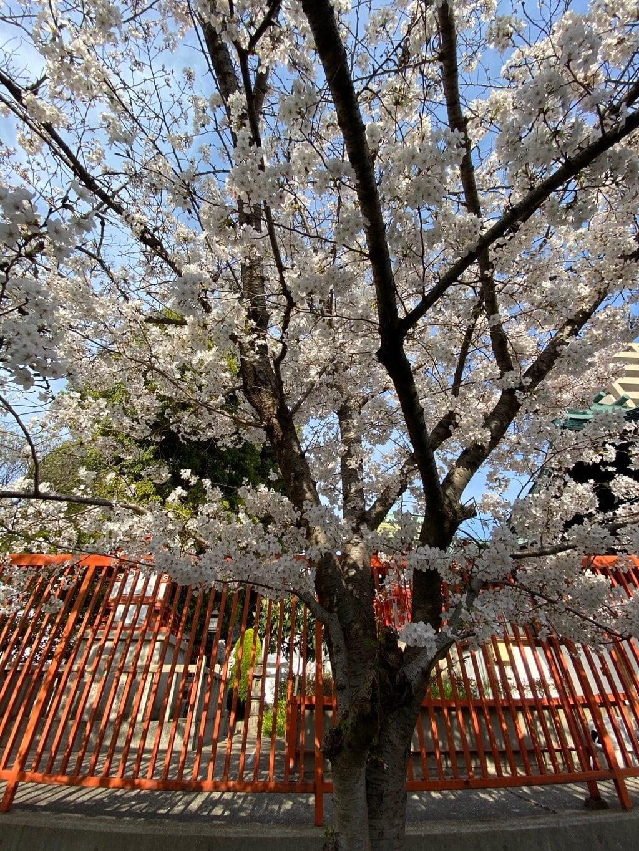 八坂神社の自然