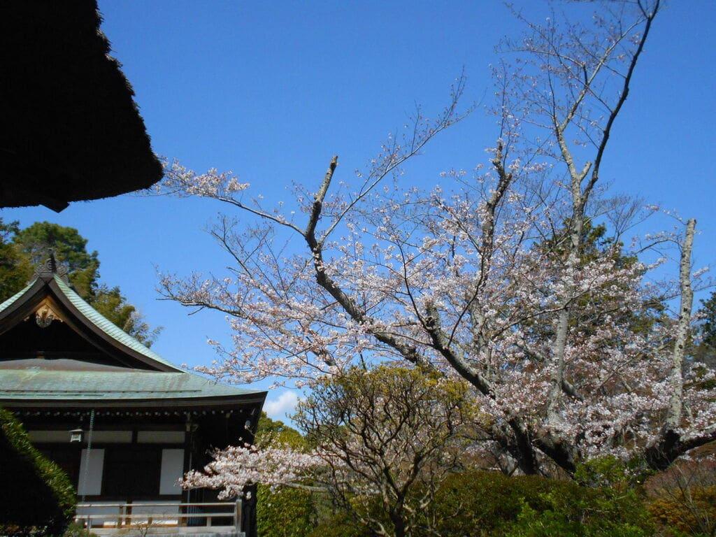報国寺の景色
