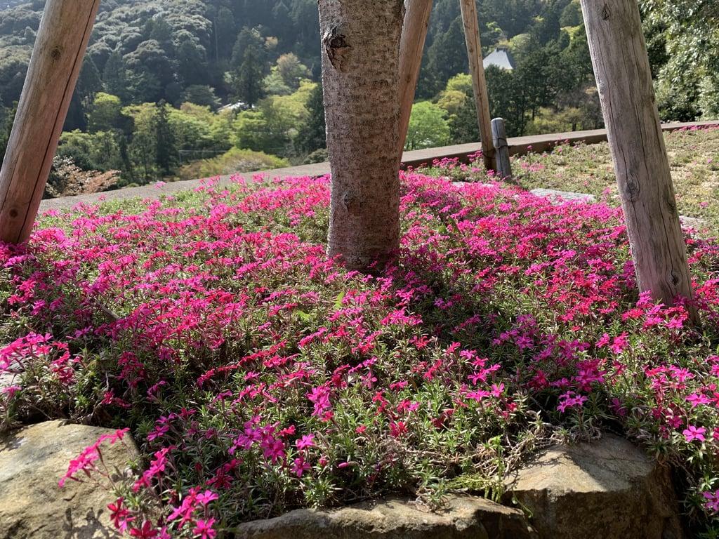 普門寺(切り絵 御朱印の寺)の庭園