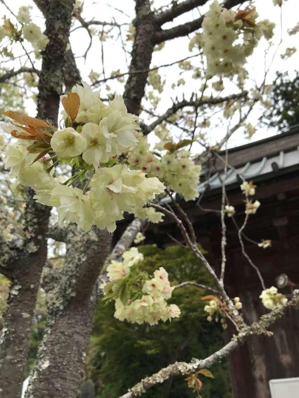 笠森寺の自然
