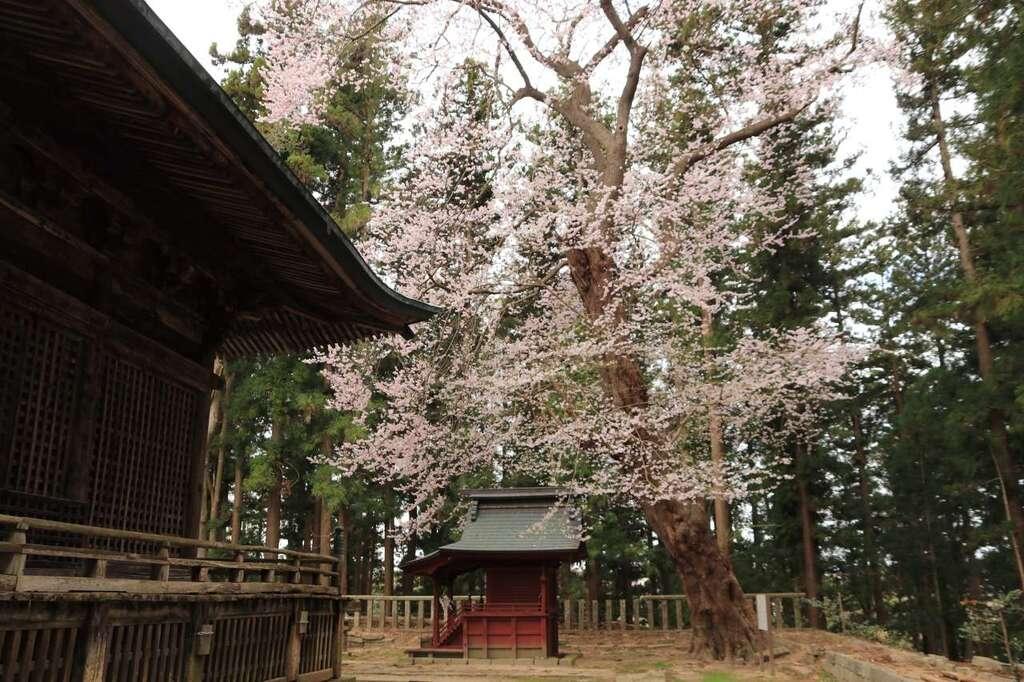 田村神社の景色