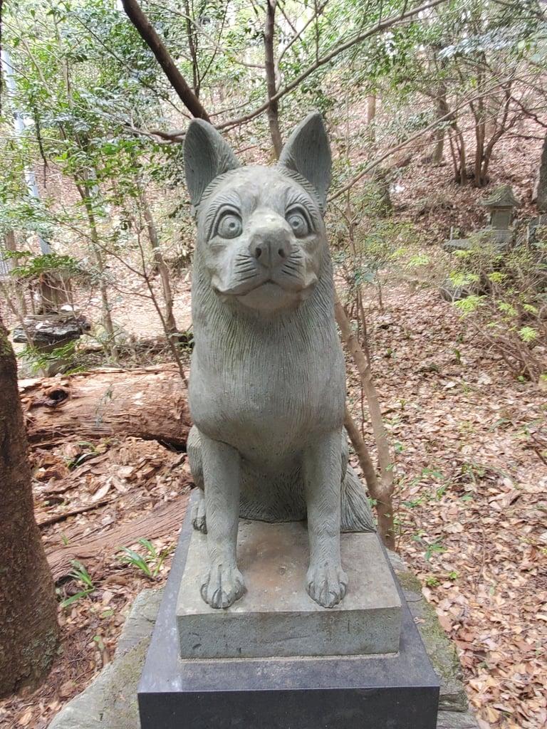 釜山神社の狛犬