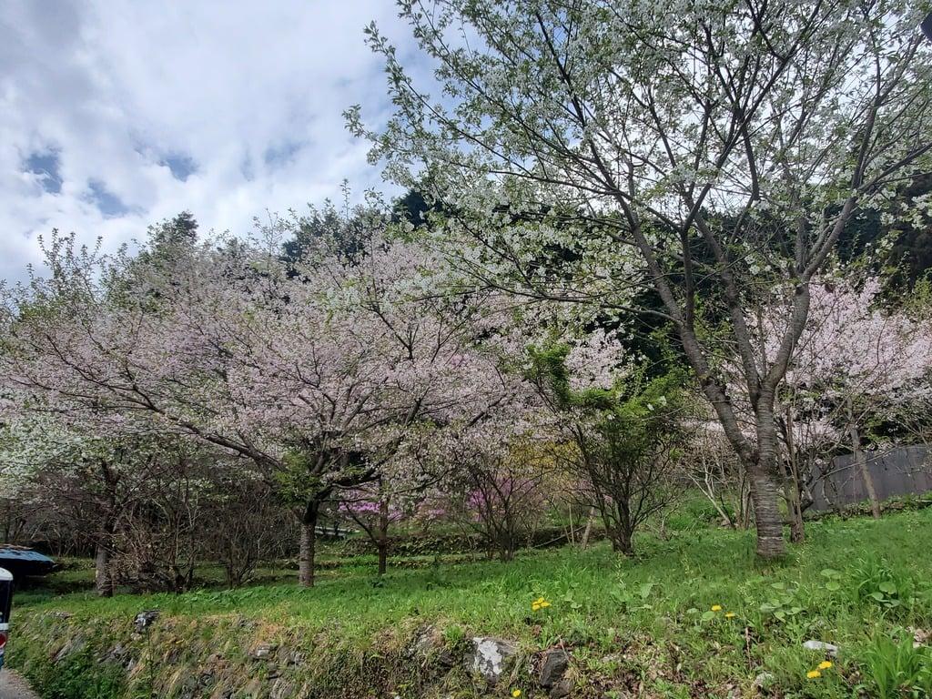 釜山神社の庭園