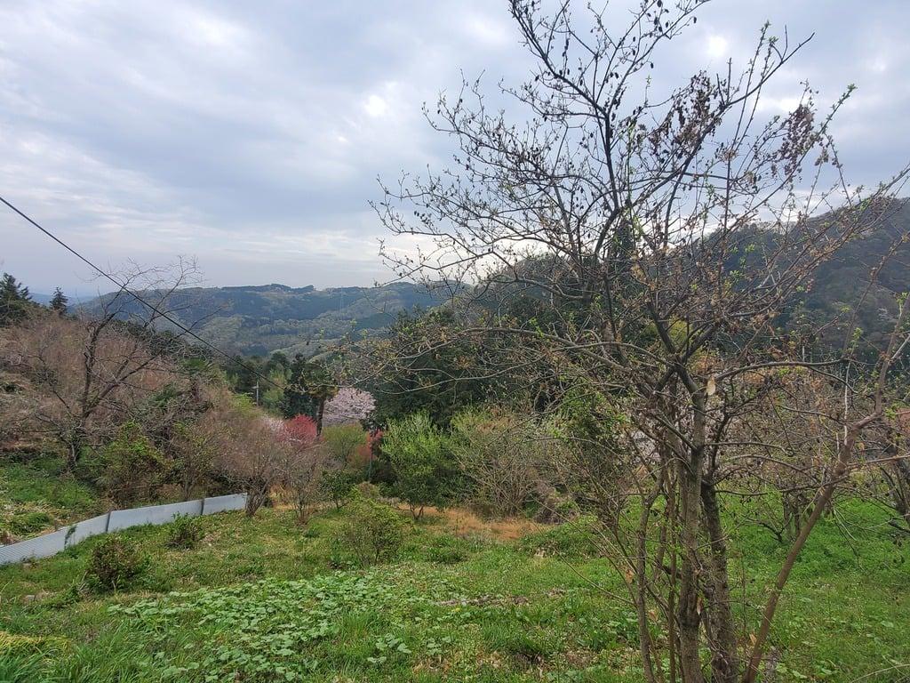 釜山神社の景色