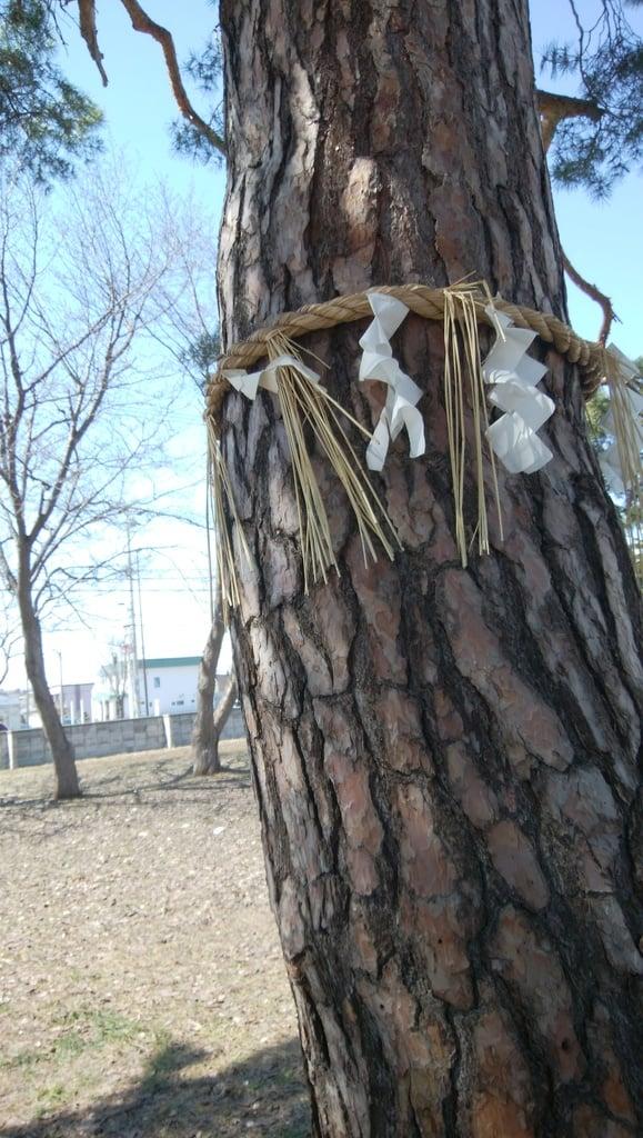 神居神社遥拝所の自然