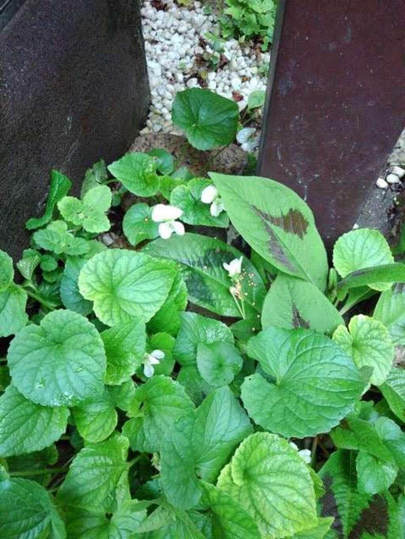於三稲荷神社の庭園