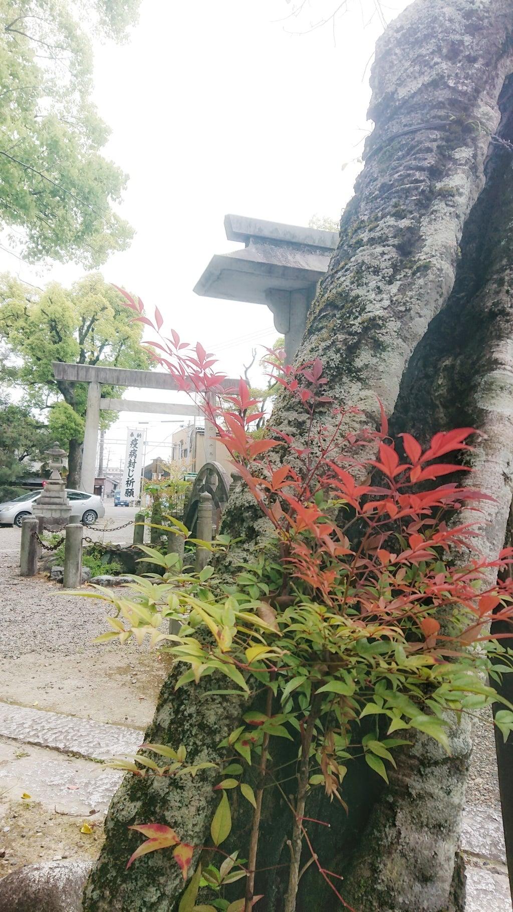 若宮神明社の自然