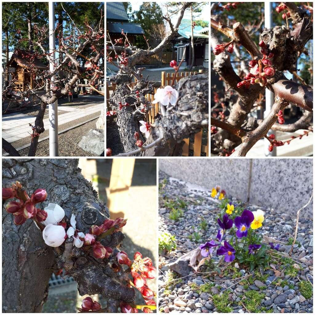 刈田神社の自然