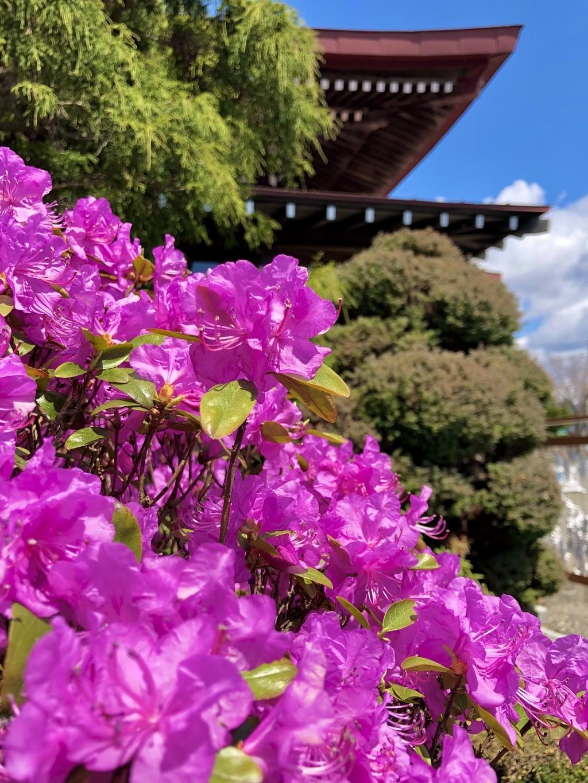 伊達神社の自然