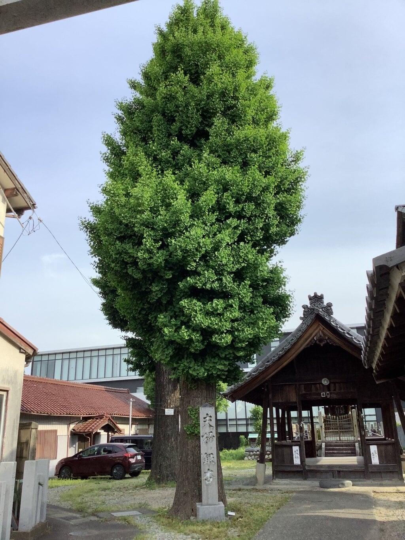 天神社(余坂天神社)の自然