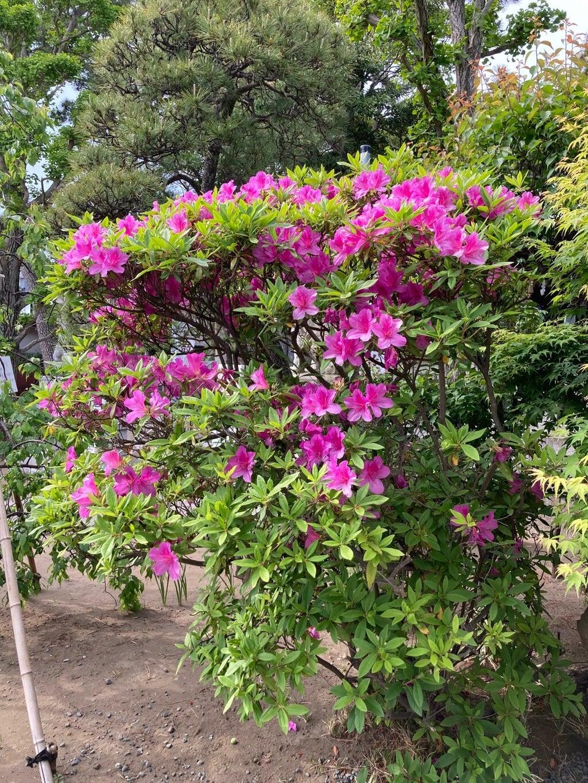 片瀬諏訪神社の庭園