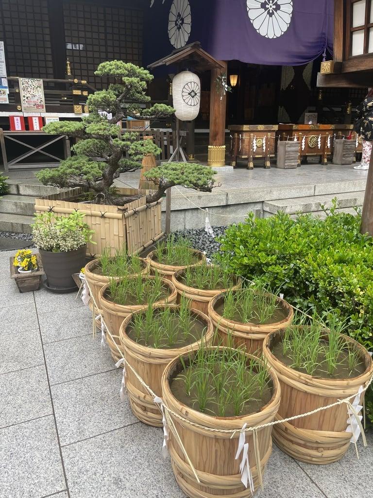 東京大神宮の周辺