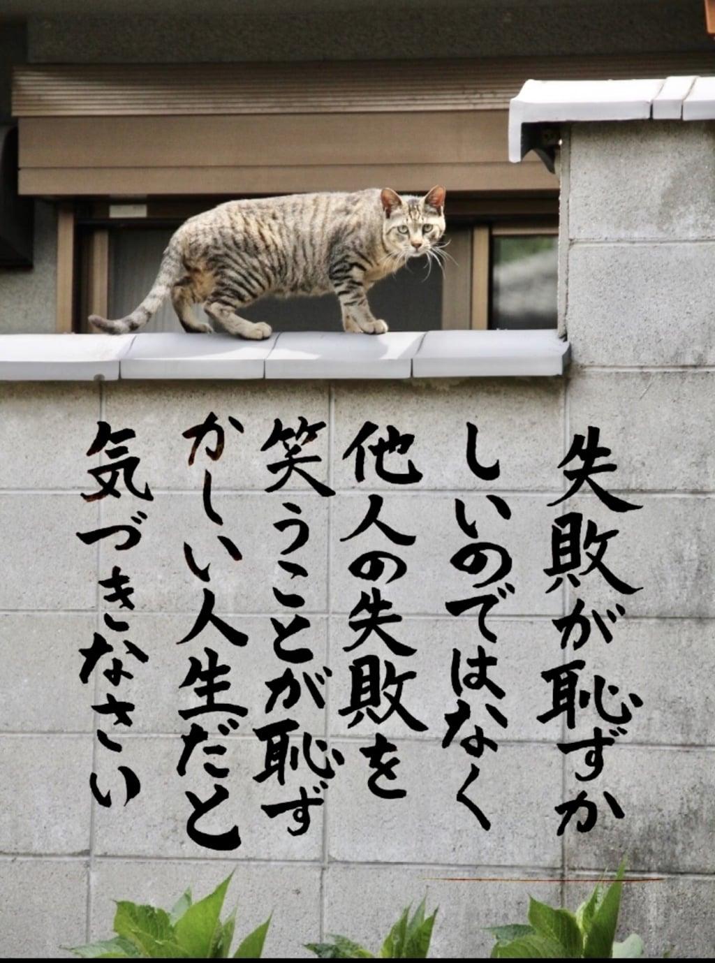専念寺の動物