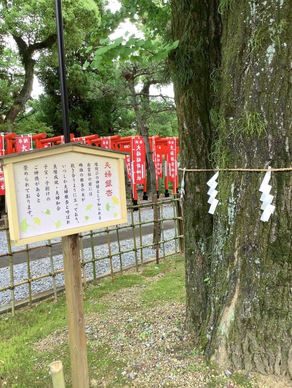 大垣八幡神社の自然