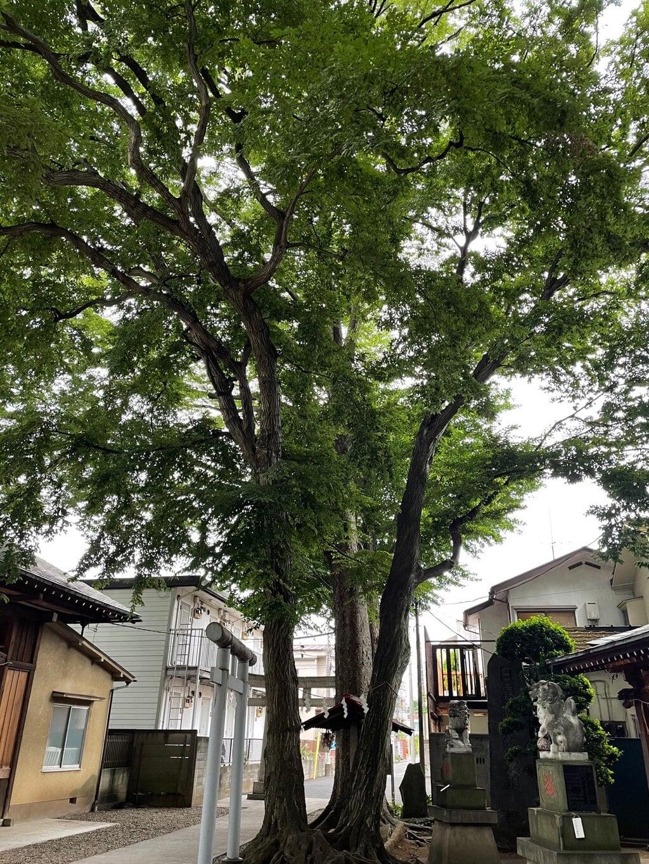 駒繋神社の庭園