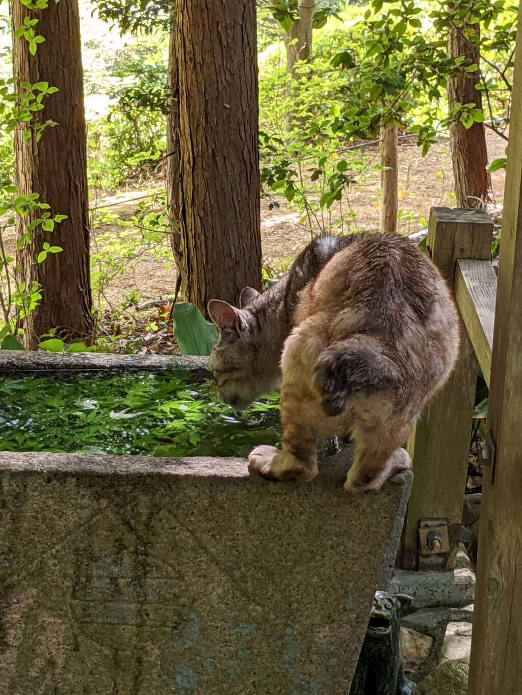 玉野御嶽神社の動物