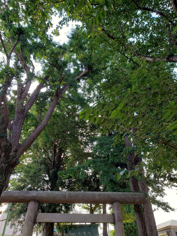 天祖神社の自然