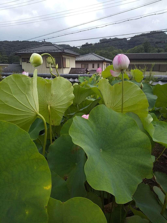 瀧泉寺の自然