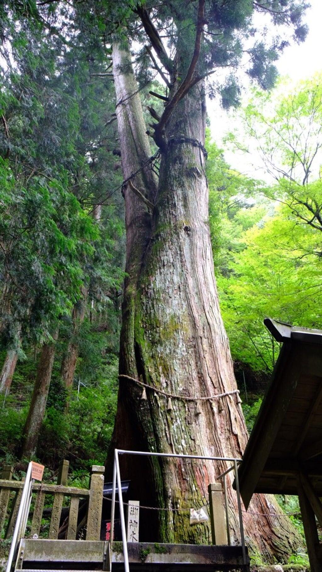 青玉神社(兵庫県)
