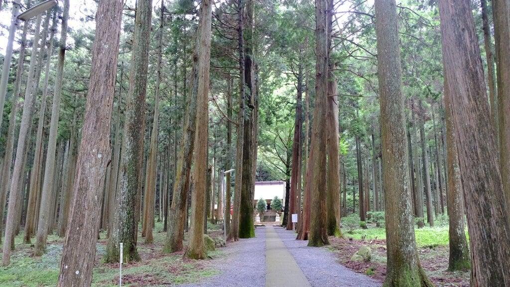 青玉神社の自然