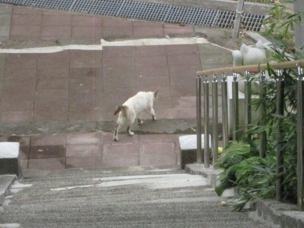 鹿角八坂神社の動物