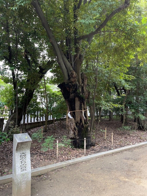 辛國神社の自然