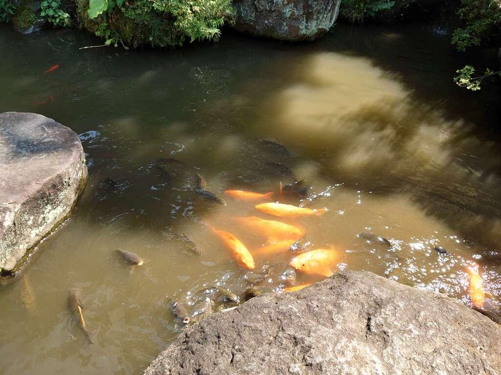 達磨寺の庭園